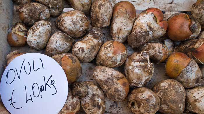 Ovuli mushrooms