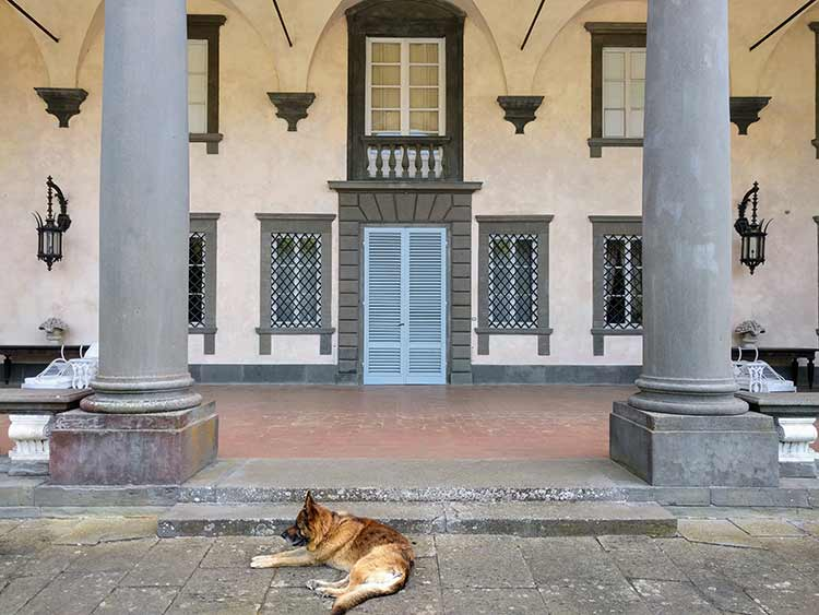 villa oliva and dog