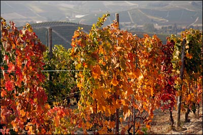 vineyard fall colors