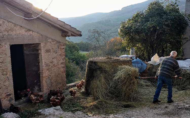 rural life with chickens and hay