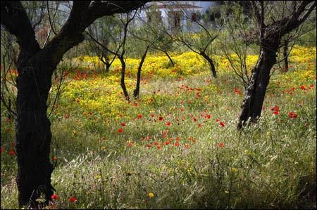 puglia wildflowers