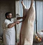 tuscan pig bucher working picture