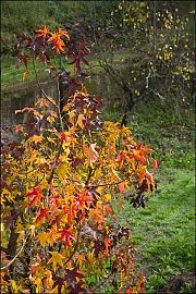 fall color picture lunigiana italy