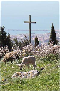 pulsano abbey lamb