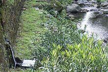 healing water spring ponte di seraglio picture