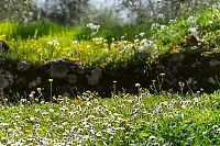 tuscan wildflowers picture