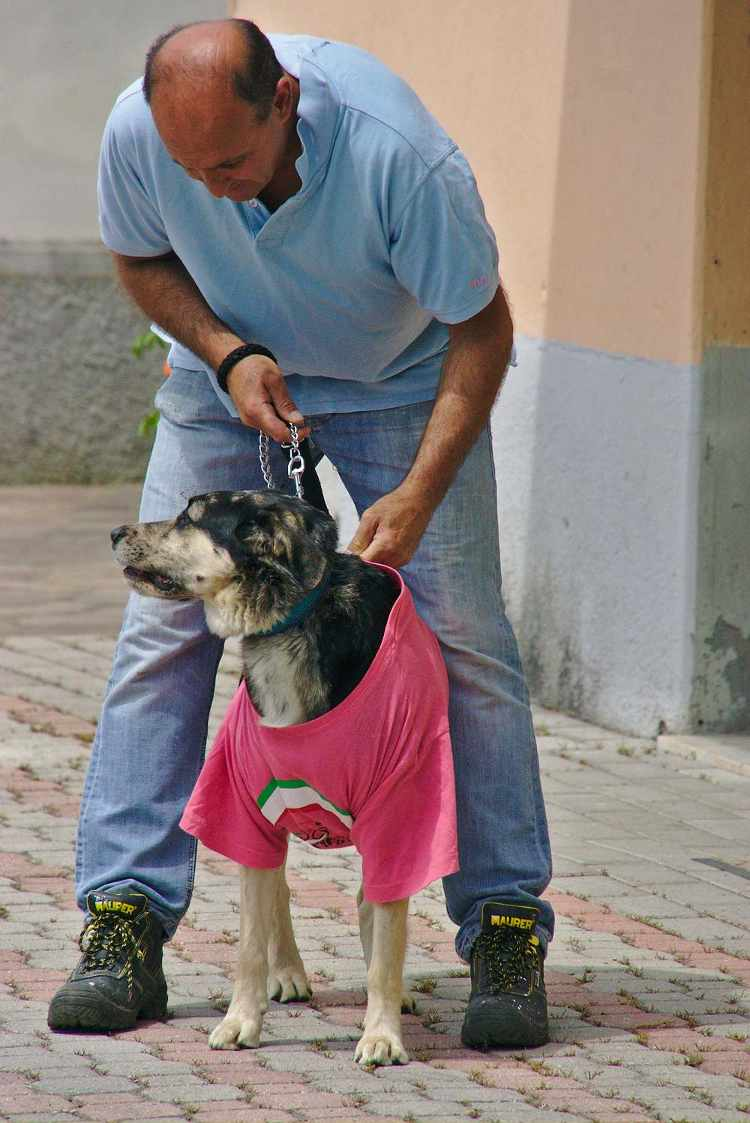 pink dog picture