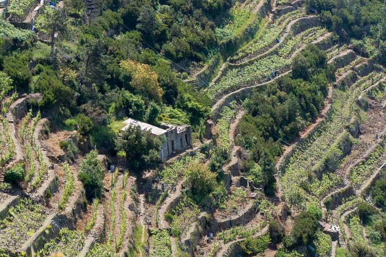 cinque terre terraces picture